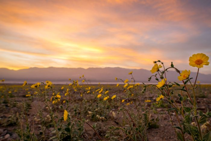 Superbloom Sunset - photo by Jason Fitzpatrick (@themuirproject)