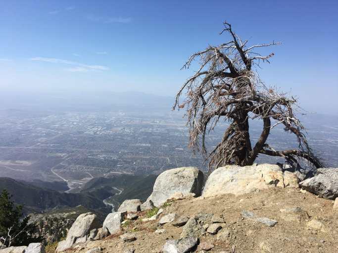 Mount Cucamonga Hike 23C89F43-AC53-4FEC-8564-A9D0FE12046E55C56F05-F320-4C8C-AB81-063DBF0533C7DC8572D