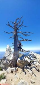 Ontario peak 06.23.19 Hike 4 4 of 12 IMG-20190623-WA0059