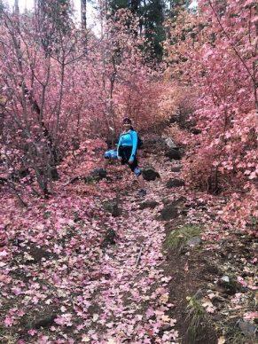 wilson-pink-flowers