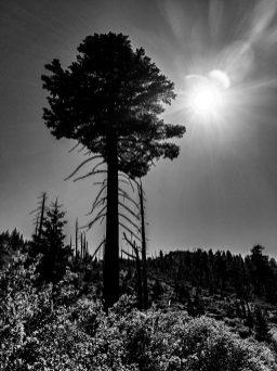 Ontario-Peak-Kelly-Camp-18