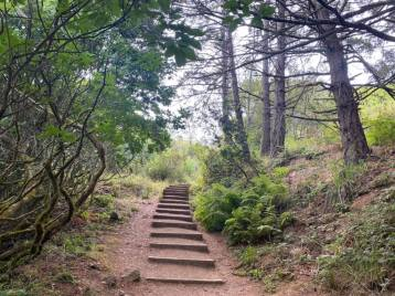 Dipsea-Trail_stairs