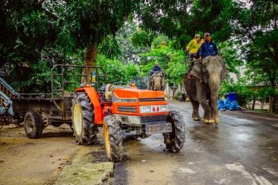 met traktor of olifant? Kies maar