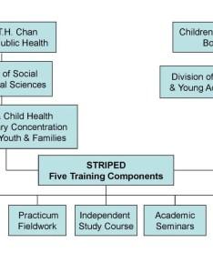 Striped organizational chart also harvard   chan rh hsph
