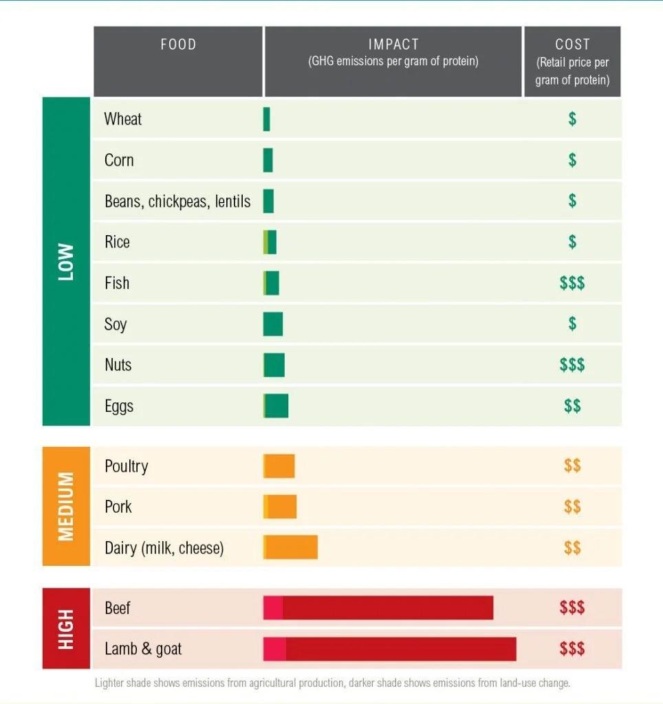 medium resolution of protein scorecard