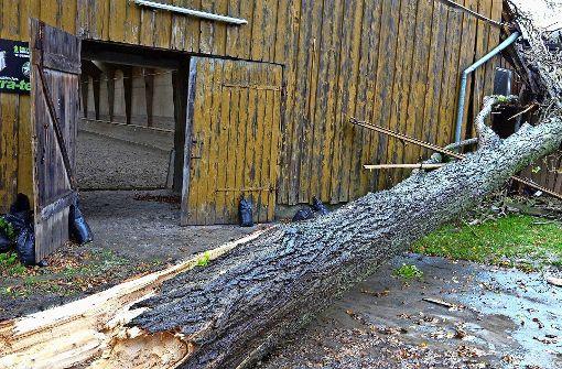 Sturmschaden in StuttgartMhringen Pferde und Reiter hatten groes Glck  Mhringen