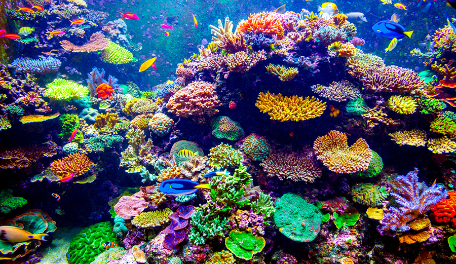 Cute Algae Wallpaper Assisted Evolution Has Just Brought Us Quot Super Coral Quot The