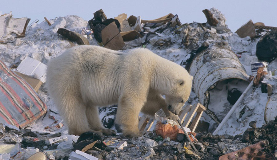 polar bear diagram 7 round trailer wiring garbage patches in the arctic ocean   inertia