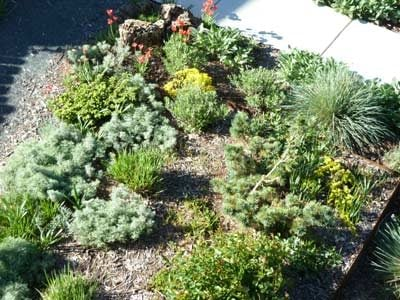 xeriscape gardening growing plants