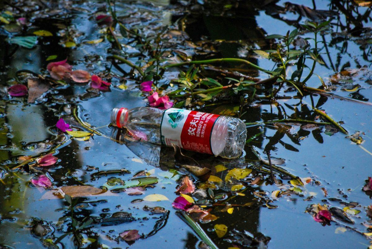 Bottiglia di plastica lasciata nello  stagno