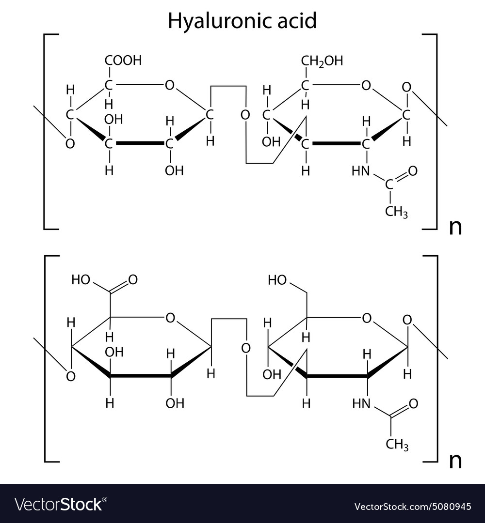 hight resolution of hyaluronic acid vector image