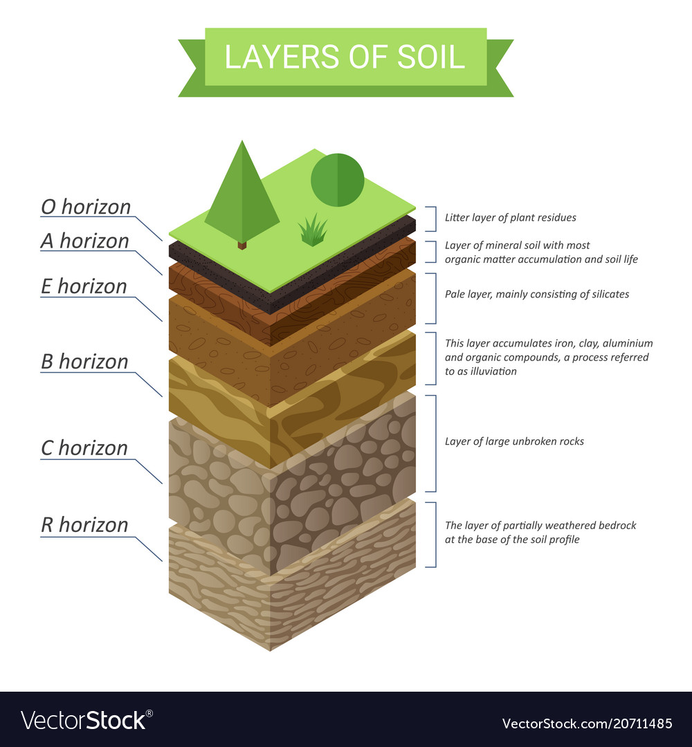 hight resolution of forest layer diagram