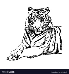 tigers clipart and stock vector image [ 1000 x 1080 Pixel ]