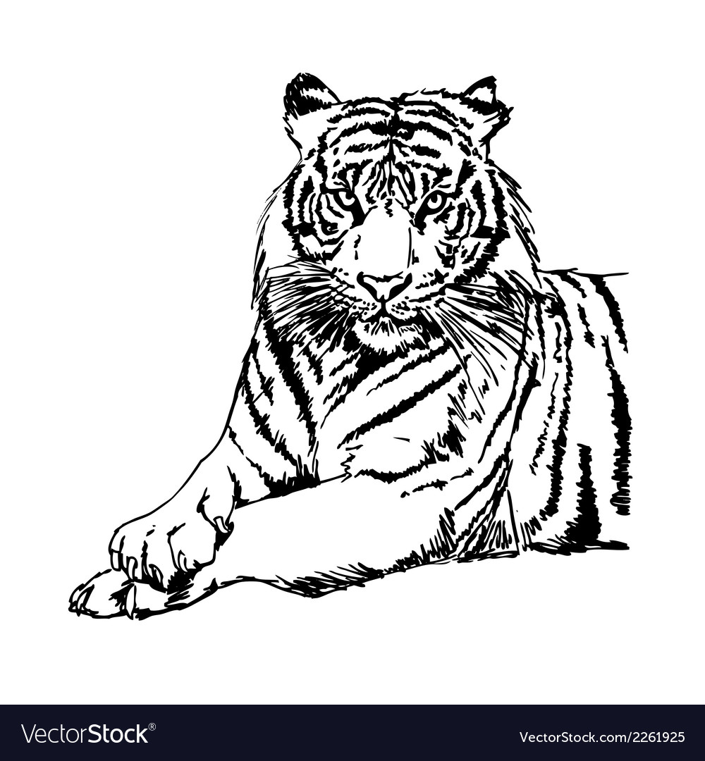 hight resolution of tigers clipart and stock vector image