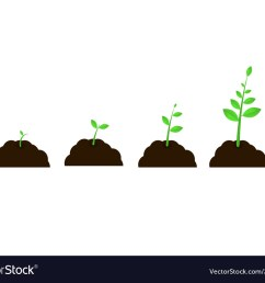 plant grow stages seed growth speed vector image [ 1000 x 830 Pixel ]