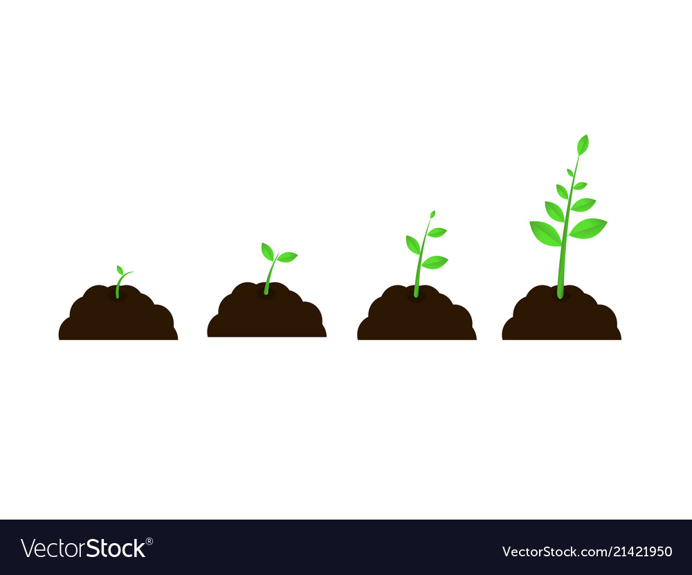 hight resolution of plant grow stages seed growth speed vector image
