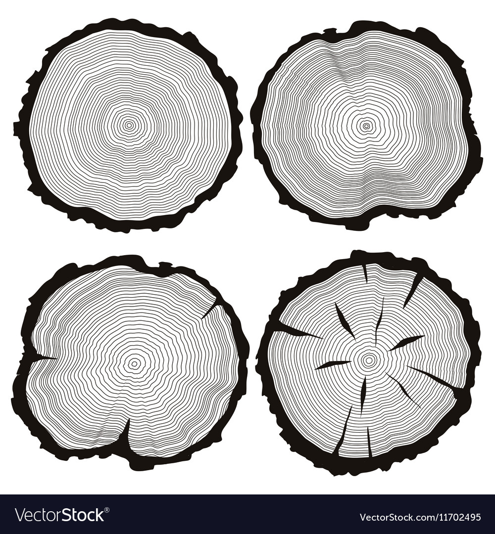 hight resolution of tree trunk diagram