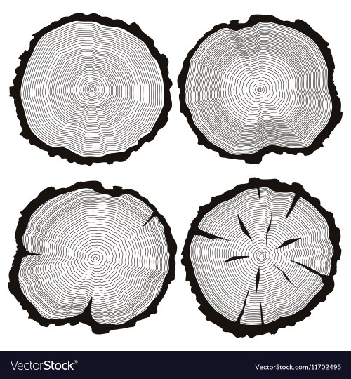 small resolution of tree trunk diagram