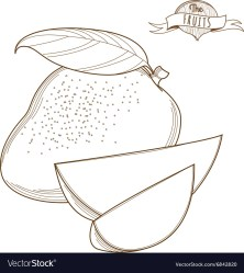 Outline hand drawn mango flat style thin line Vector Image