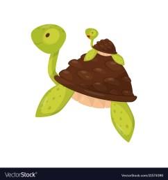 baby turtle clipart [ 1000 x 1080 Pixel ]