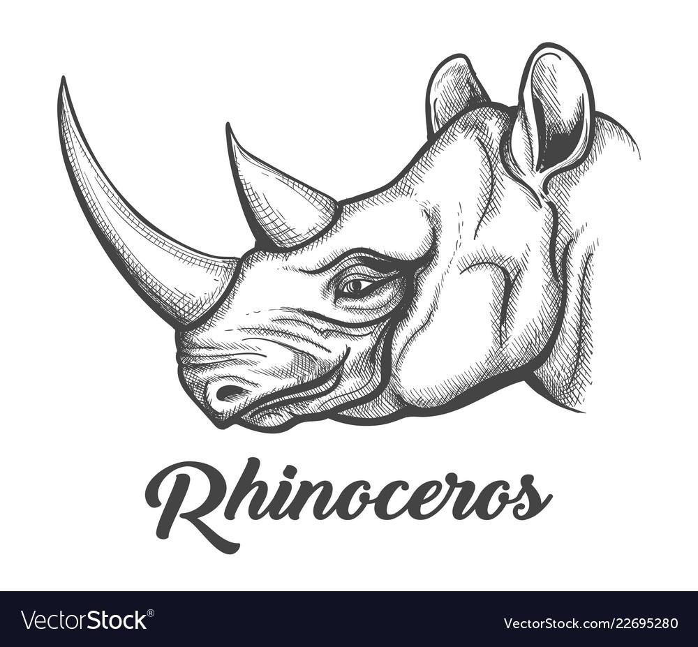 medium resolution of rhino head diagram