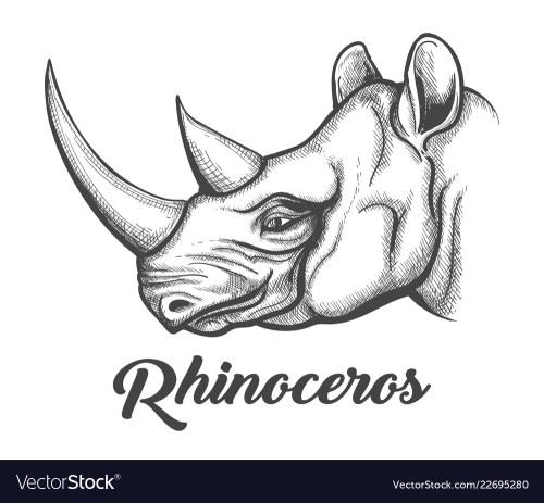 small resolution of rhino head diagram