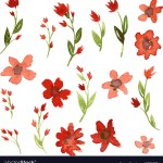Set Watercolor Drawing Red Flowers Royalty Free Vector Image
