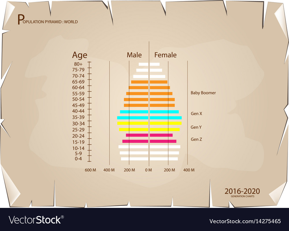 hight resolution of 2016 2020 population pyramids graphs with 4 genera vector image