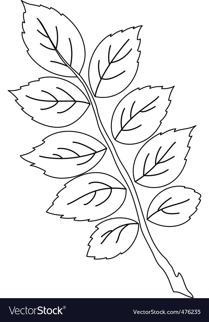 Rose Drawing Flower, rose, leaf, branch, monochrome png