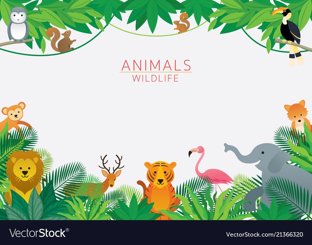 wild animals in jungle