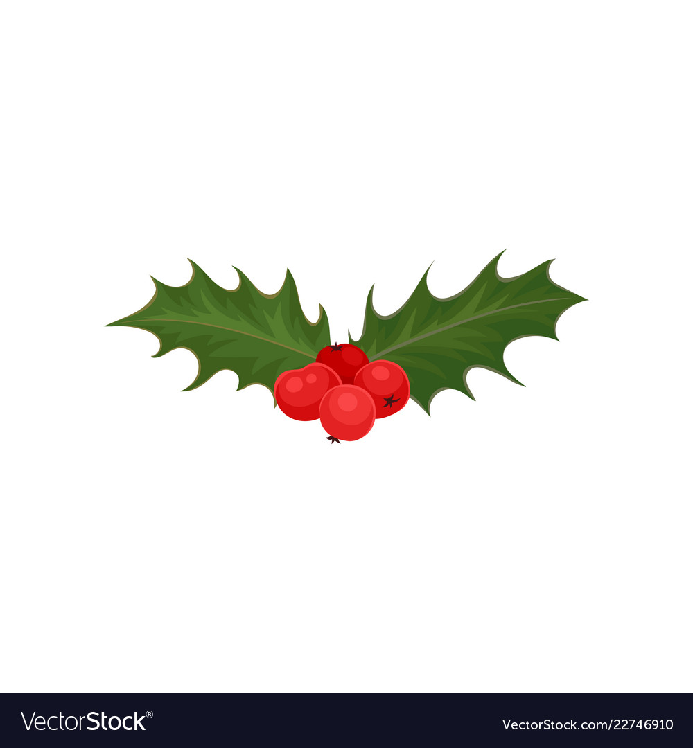 christmas holly with red