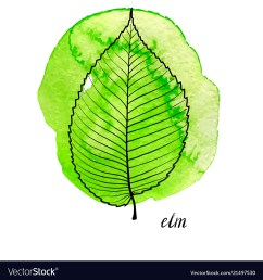 elm tree diagram wiring diagram inside elm tree diagram [ 1000 x 1080 Pixel ]