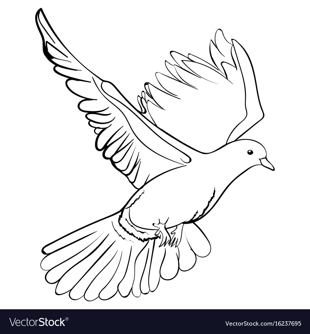 free flying white dove
