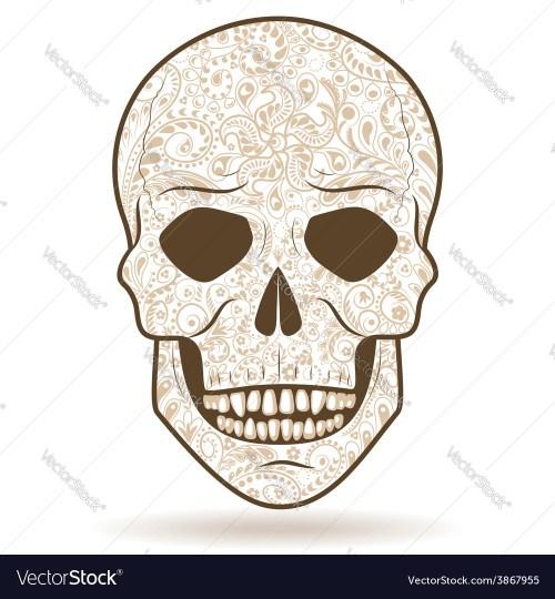 small resolution of tiger tooth skull diagram