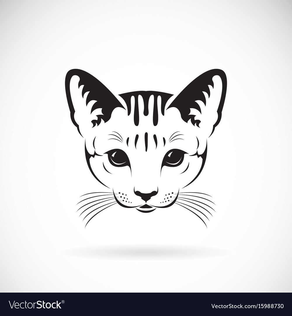 cat face on white