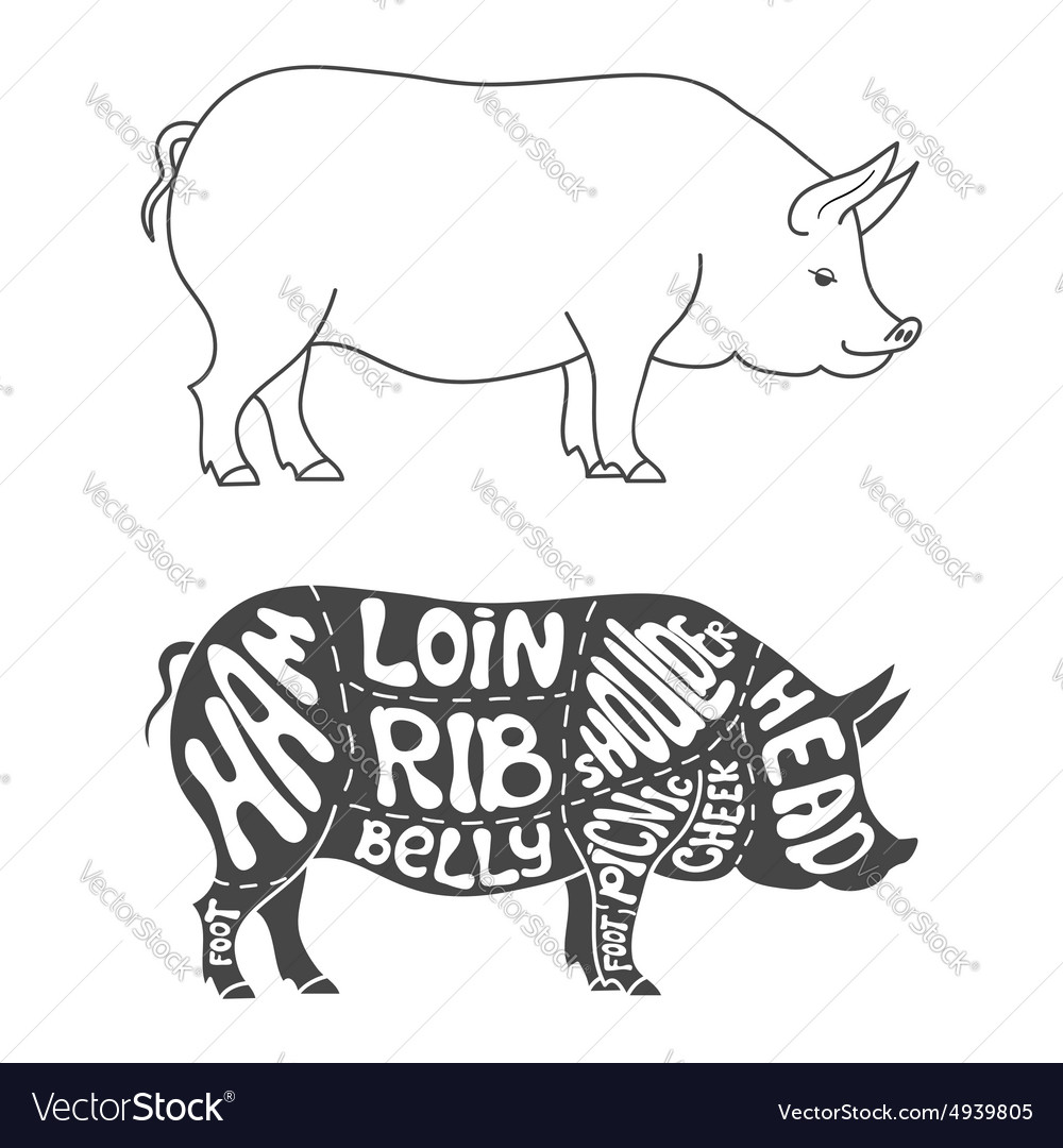 pig cuts diagram ford points distributor wiring pork royalty free vector image vectorstock