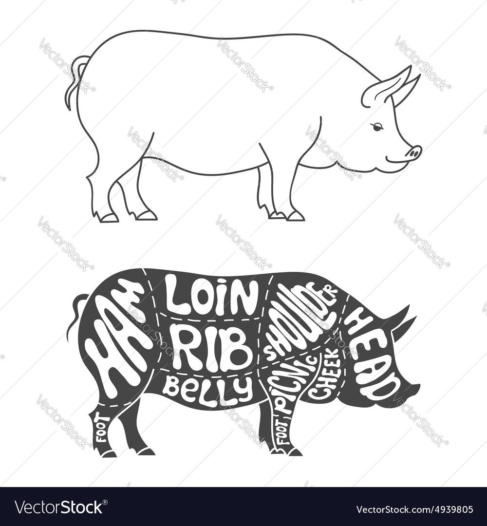 medium resolution of pork cuts diagram vector image