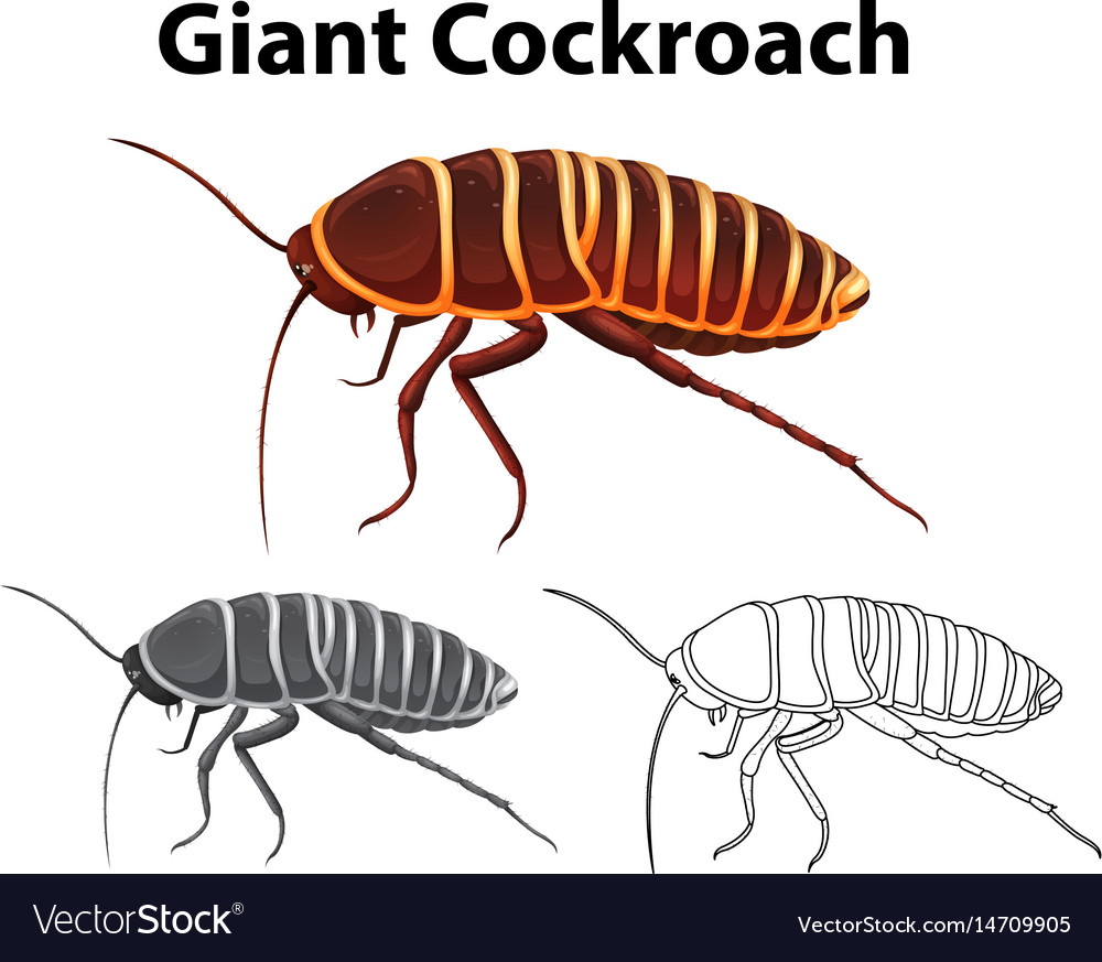 medium resolution of cockroach diagram