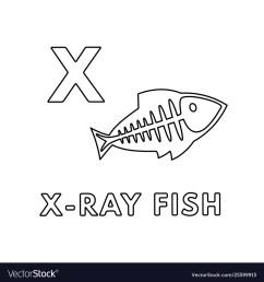 ray fish diagram label [ 1000 x 1080 Pixel ]