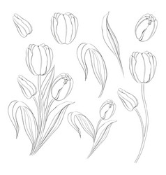 Single Rose Black and White Outline Vector Images (over 500)