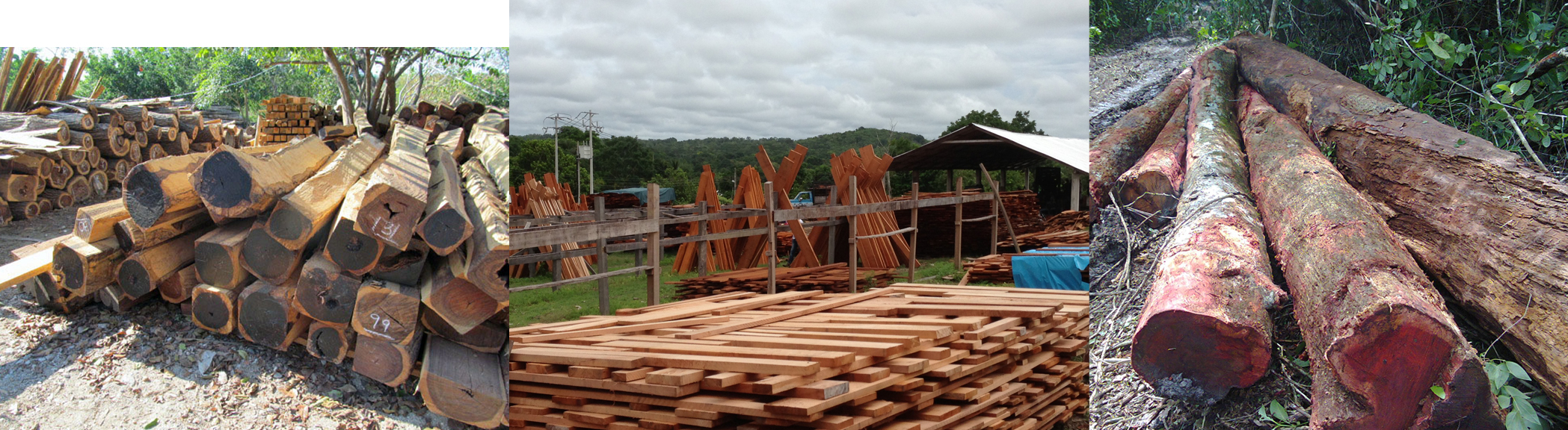 Acacia Lumber For Sale