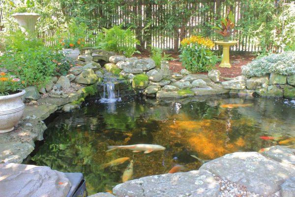 backyard koi ponds and water gardens