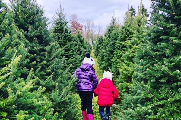 20 Christmas Tree Farms Near Philadelphia Where You Can Buy a Tree