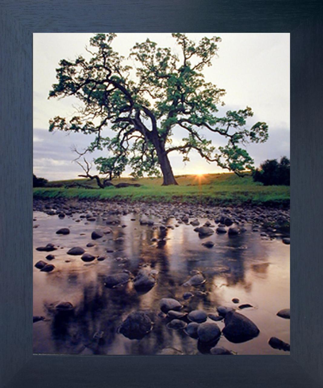 oak pine creek tree