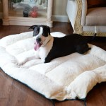Extra Large Dog Bed Mat D04hml Mb X Armarkat Online Store