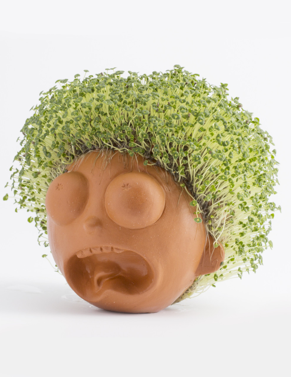 Chia Pet Images : images, Morty