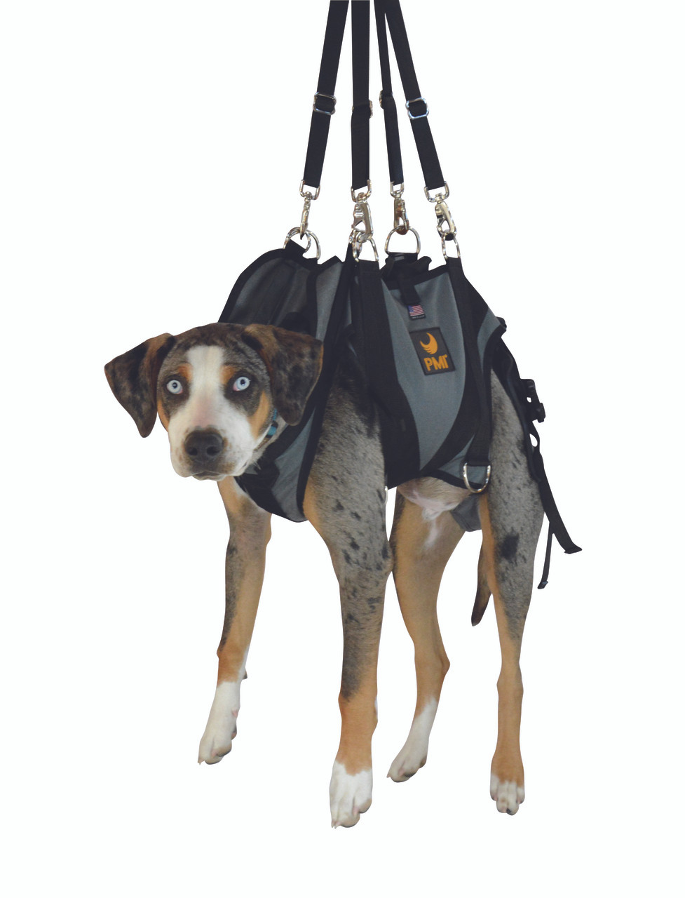 hight resolution of anexk9 harness