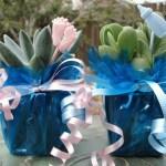 Baby Shower Favors Mini Succulent Plants