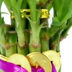 Feng Shui Lucky Bamboo Plant