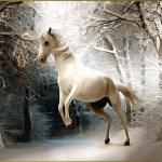 Custom 3d Horse Wallpaper The Winter Forest Murals For Pegasus Bedroom Tv Background Wall Waterproof Wallpaper Onshopdeals Com
